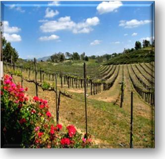 Land vineyard button.jpg